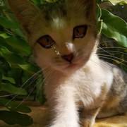 waledsala74's Profile Photo