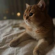 Burlishka_13's Profile Photo