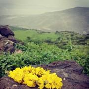 Sanaa_sh's Profile Photo