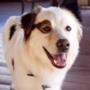 dogtheblog's Profile Photo