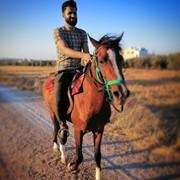 mosajaradat's Profile Photo