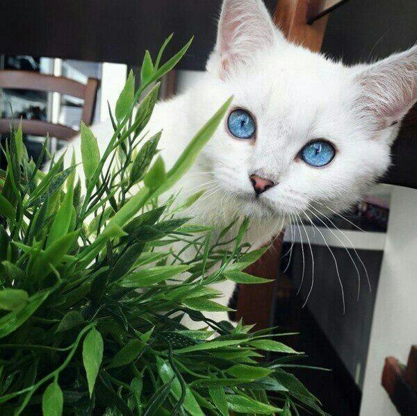 Holuychenko's Profile Photo