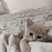 dein_xyx's Profile Photo