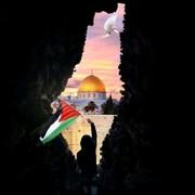 zinabahmed3's Profile Photo