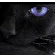 anka_pezh's Profile Photo