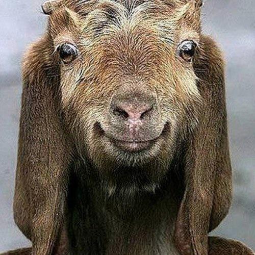 oluba's Profile Photo