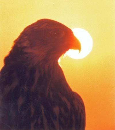 DouglasPontoCom's Profile Photo