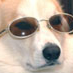 LilCorgi's Profile Photo