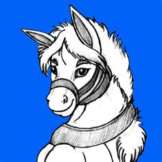ridercz's Profile Photo