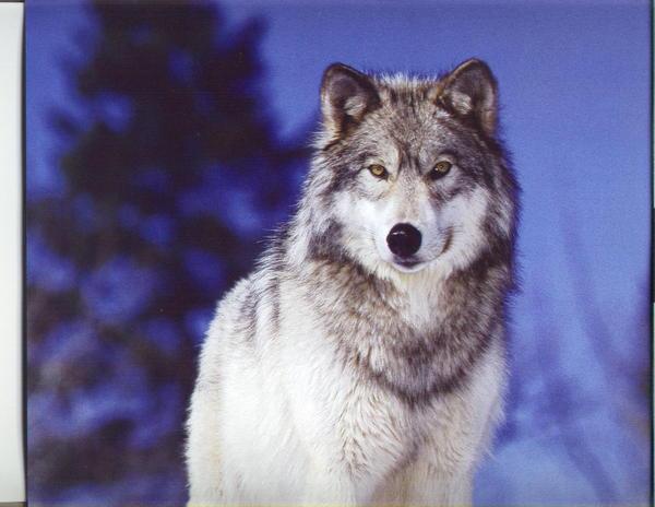 technokid's Profile Photo