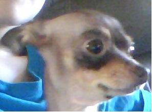 Pwnerninja's Profile Photo