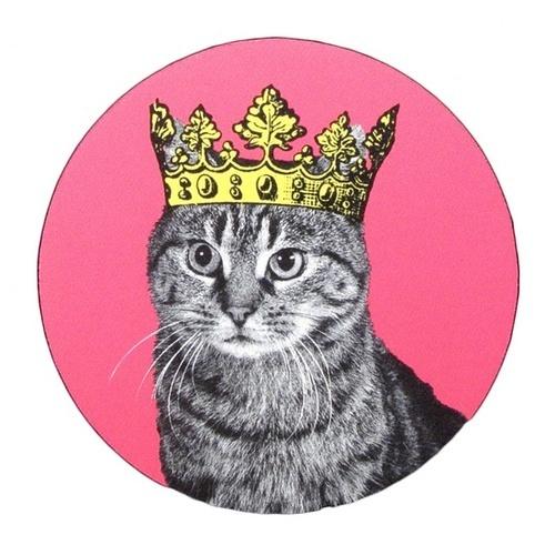 catqurl's Profile Photo