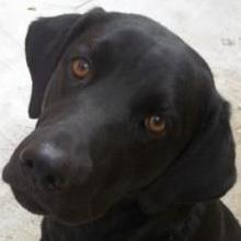 atatjacob1's Profile Photo
