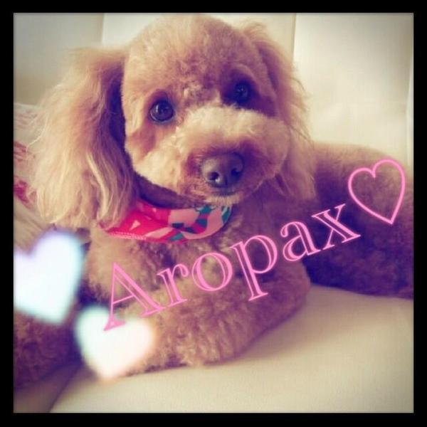 Aropax's Profile Photo