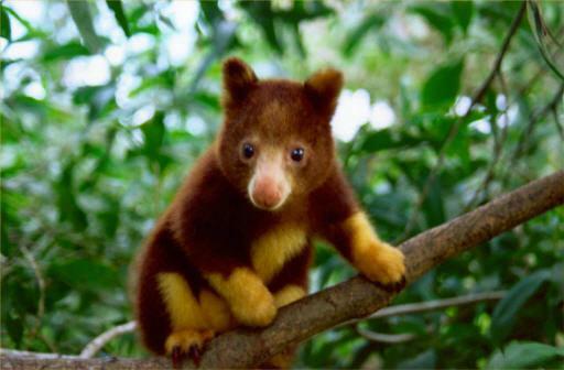 TreeKangaroos's Profile Photo