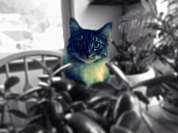 dolan_raynerd's Profile Photo