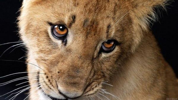 lionelmane's Profile Photo