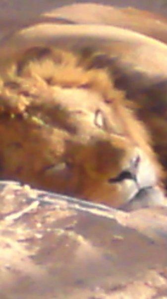 reemtawfeeque's Profile Photo
