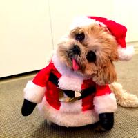 marniethedog's Profile Photo