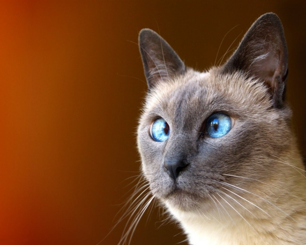 wizardcatsao's Profile Photo