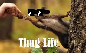 SquirrelThugLife's Profile Photo