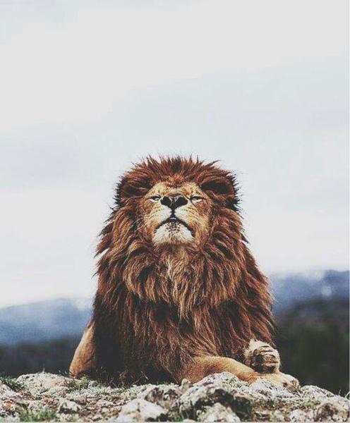 swagdepoulebebe's Profile Photo