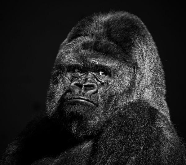 dwatty's Profile Photo