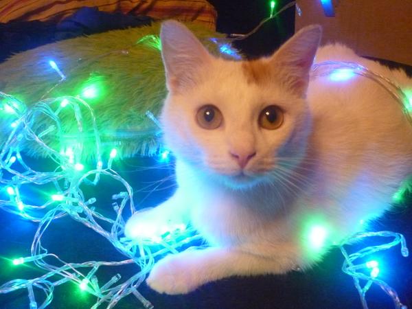 Alena1488228's Profile Photo