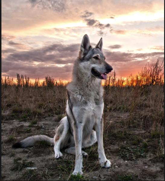 tuxipuppy's Profile Photo