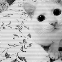 krytezos's Profile Photo