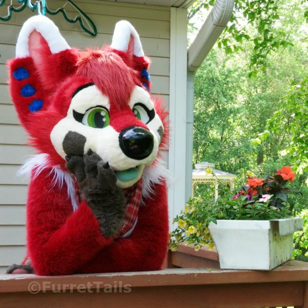 FurretTails's Profile Photo