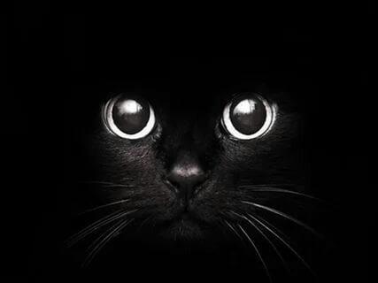 black_cat23's Profile Photo