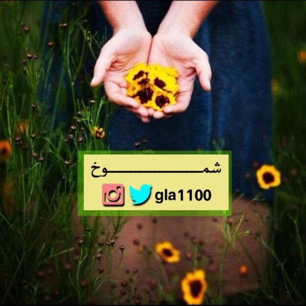 gla1100's Profile Photo