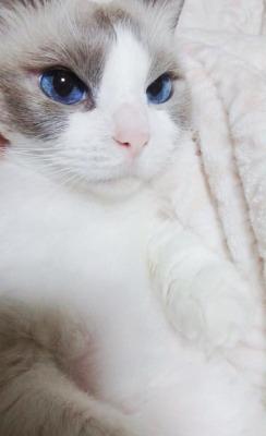 picsbc4's Profile Photo