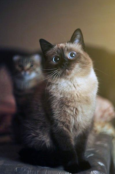 shinarakurakova's Profile Photo