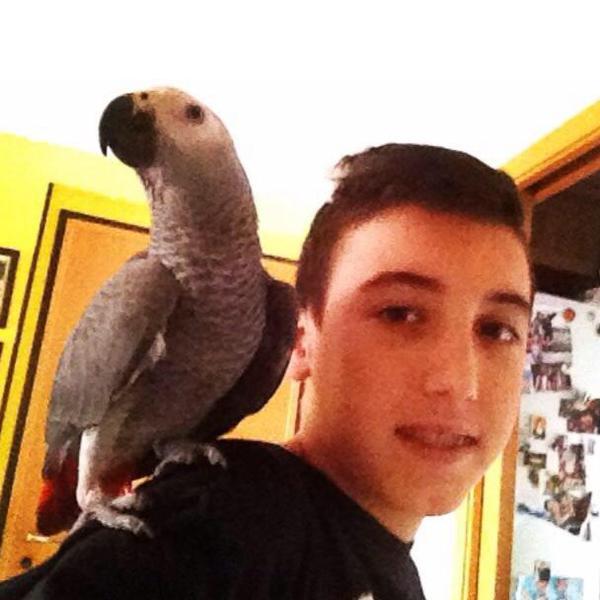 Davidecleri01's Profile Photo