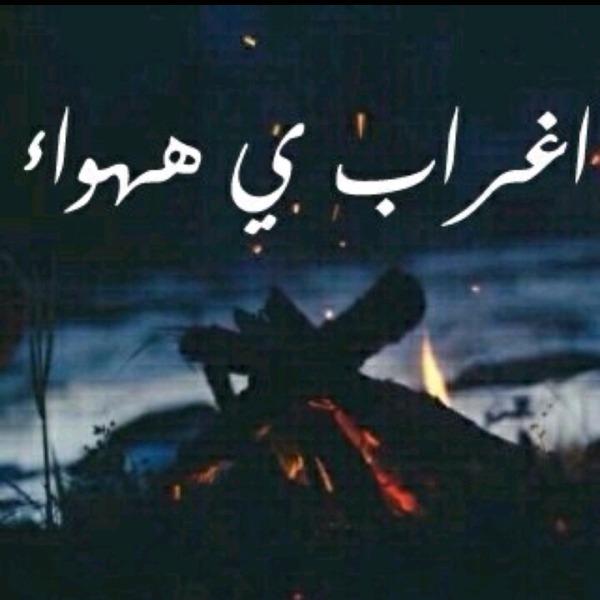 Alsh3ra_zoz's Profile Photo