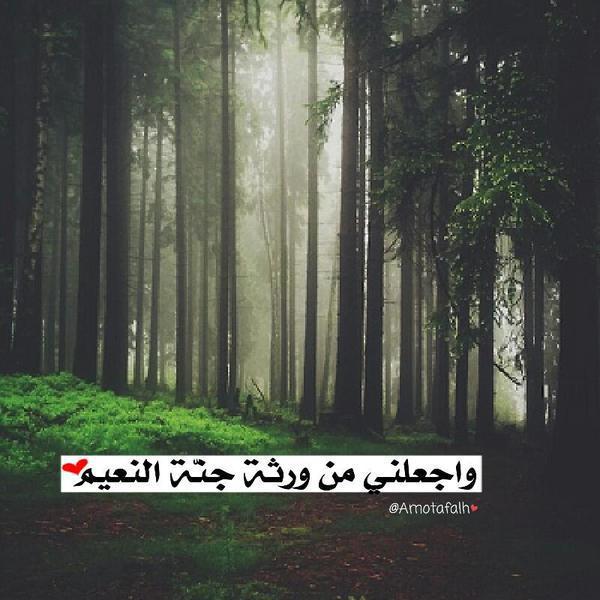 saiid11s's Profile Photo