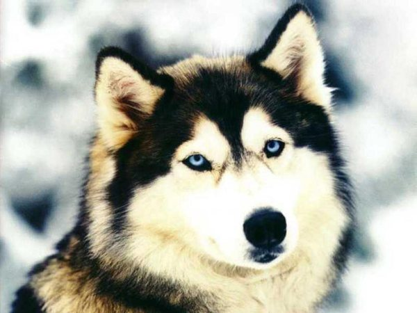 Kroma1997's Profile Photo