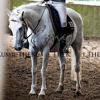 TheKumii's Profile Photo