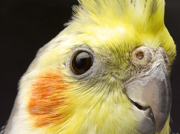 iradokoda's Profile Photo