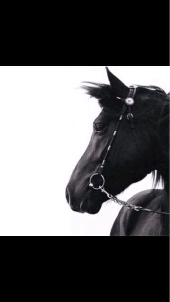 outgkr's Profile Photo
