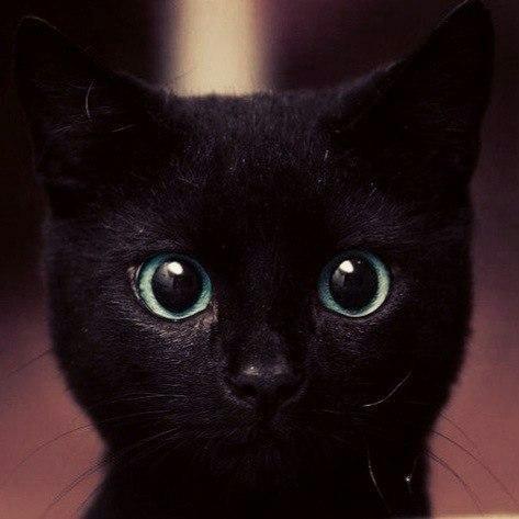 BlacKOLLlaK's Profile Photo