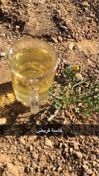mesha33l's Profile Photo