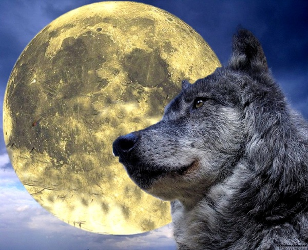 WolfAnonymus's Profile Photo