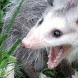 neguata's Profile Photo