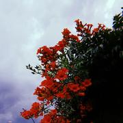 karadenizkizi18's Profile Photo