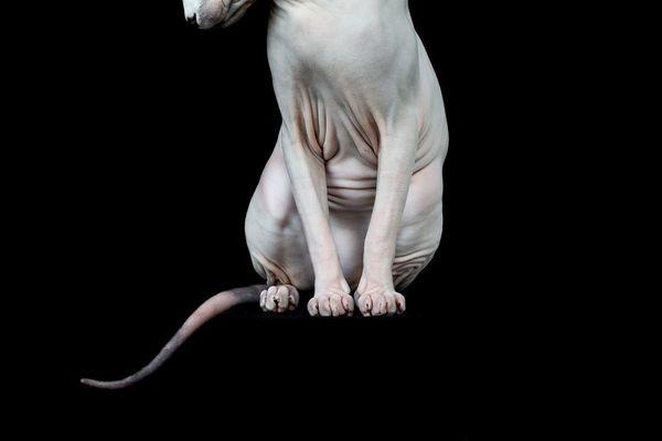 Catsuperhero_Official's Profile Photo