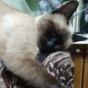 Shezana_'s Profile Photo