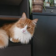 novaelody's Profile Photo